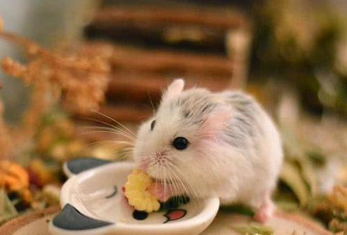 科学生来爱运动,即使没有跑轮,鼠鼠在洗手池里照样玩得欢蜗牛验证仓鼠的速度是多少图片