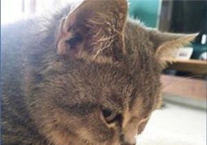 可爱卖萌表情猫咪图片第一安全表情包走开1!你丑到朕了图片