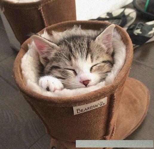 猫咪们睡觉的姿势铲屎官永远都理解不了,真是看着都难受呀!
