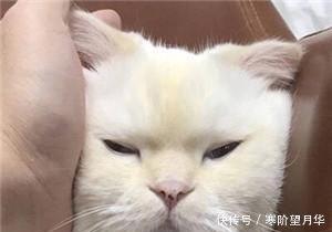 可爱卖萌表情猫咪图片说说搞笑的带失眠走开1!你丑到朕了图片