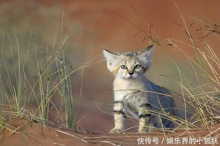 全球最可爱的10大濒临灭绝动物