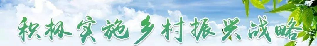 振兴新闻|曹村,北未来如何发展?具体计划来到岛屿之旅