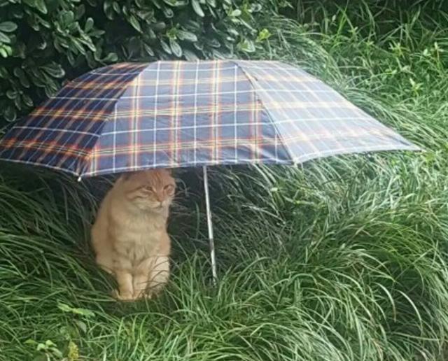 一雨天同学微信牵手表情图里看到1一v雨天猫,于是给它留了把伞图片