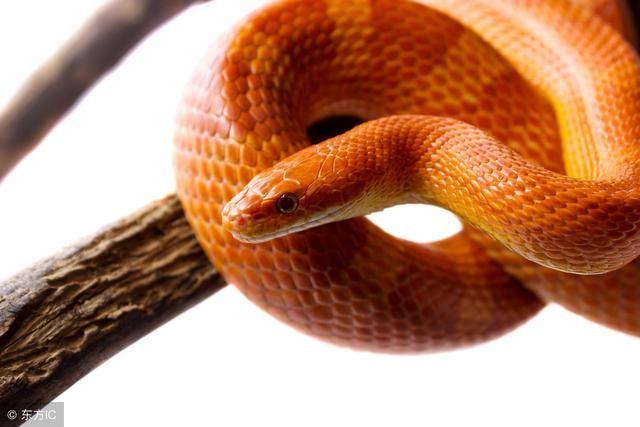 9月,红透半边天的生肖蛇,人生一路高歌