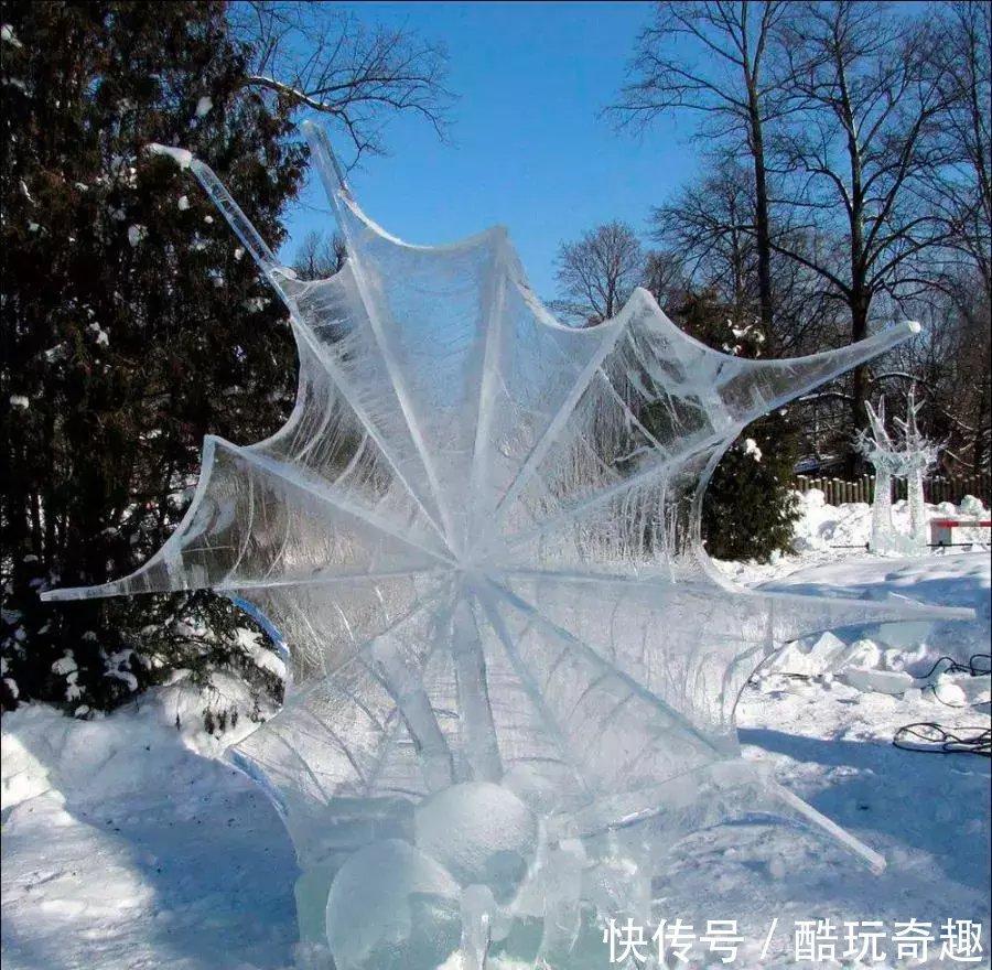 我被冰冻了100年_一个被冰冻的蜘蛛网.