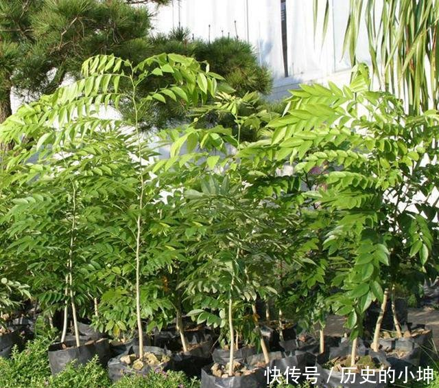烟火流放的季节,不管有钱没钱,都要在家里养一盆栽,驱蚊又好看,大气又