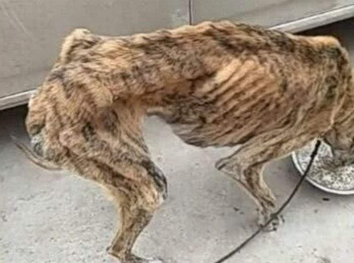 瘦成骨头动物图片