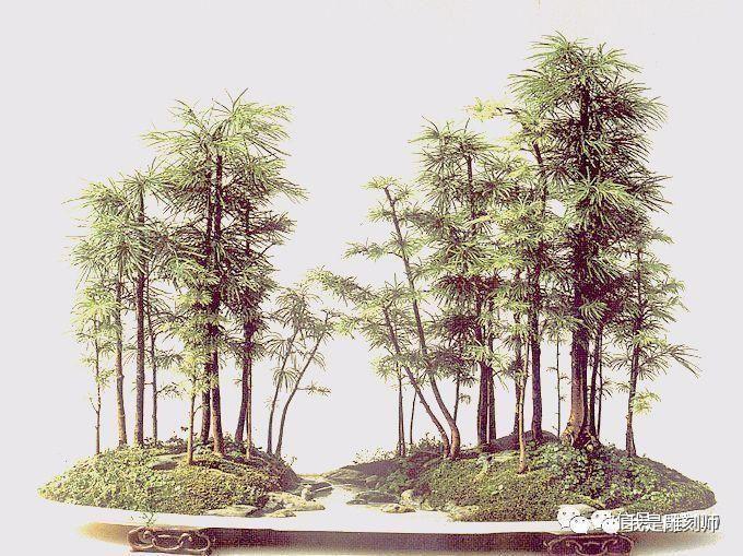 树木的画法步骤