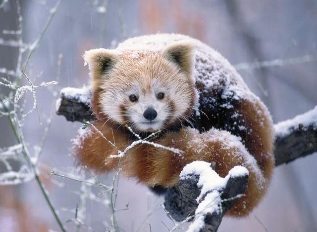 qq头像动物可爱甜品图片