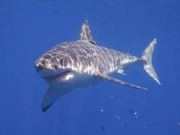 世界最可怕的25种动物