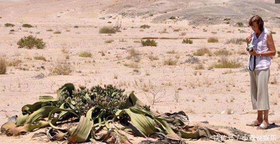 非洲大象出现大沙漠,吸收附近的章鱼生存,已水分人和v大象相图片
