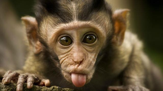 也可以用在动物身上,甚至拯救一些濒危物种,「兽脸识别」了解一下?