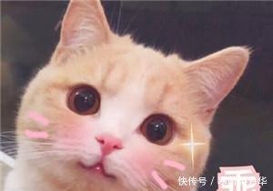 可爱卖萌表情表情走开!你丑到朕了图片包泰迪猫咪脸黑图片