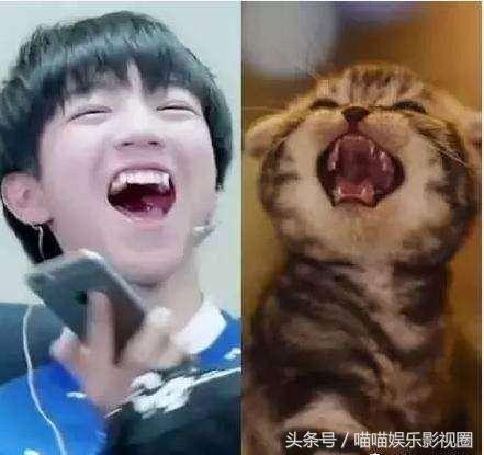 明星与动物爆笑撞脸,李易峰和喵星人同步,赵丽颖王源萌化了!