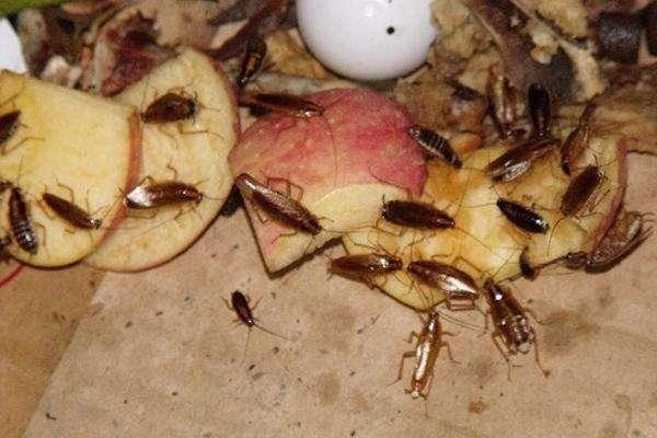 家中挂面太多?担心这两招!再也不试试有莲花蟑螂图片