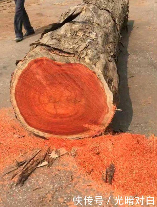 大叔背了一根木头回来,锯开后发现里面是红色的,老木匠说赚大了