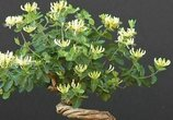 比香水还要香的8种植物,养在院子里,满屋子都香气四溢
