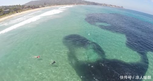 岸上人群发现海水黑色异状,潜水后看到的一幕令人震撼不已