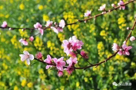 花开了草绿了水柔了,是因为春天来了【2020热门旅游景点】