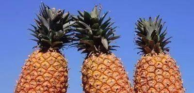 老板■3招买菠萝,记好别让老板给你选,招数用对,自己挑的保准好吃!
