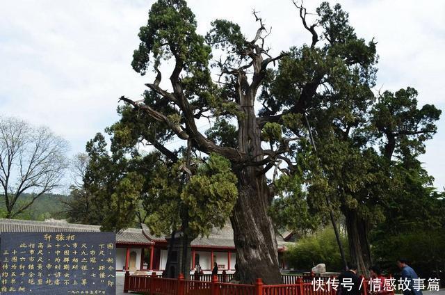 我国6大树中之最最高的在云南,最毒的在广东,最贵的在福建