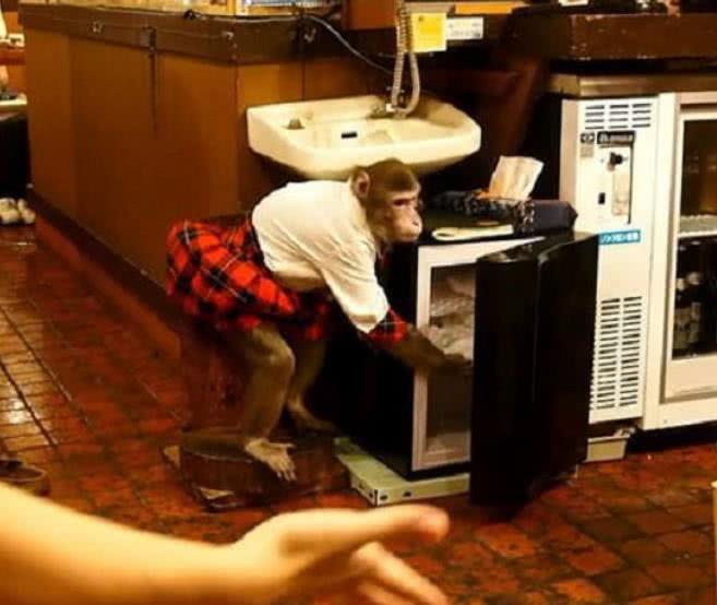 """『奇葩』日本的""""奇葩""""餐厅,聘请猴子当服务员,网友:成精了!"""