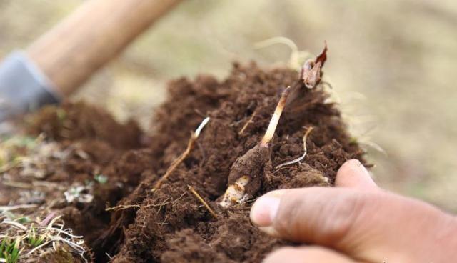 冬虫夏草产业发展高峰论坛即将在杭州论剑 直面虫草产业痛点