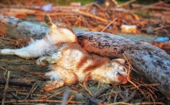 主人回头被吓到,以为狗狗死了,原来是哈士奇躺倒打滚泥巴沾满身