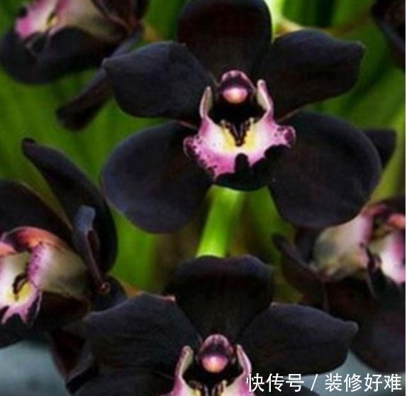 """<b>堪称""""妖花""""的兰花,花色艳丽,花香浓郁似香水,比牡丹茶花还美</b>"""