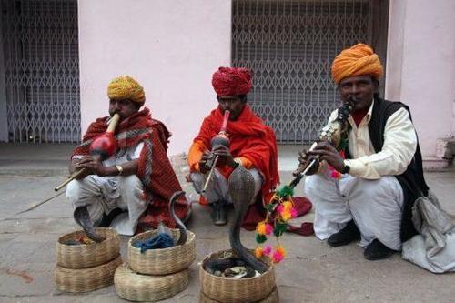 印度舞蛇人真那么神奇,吹笛子就能让蛇起舞?导游:背后暗藏玄机