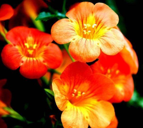 喜鹊叫喜事来,不再做单身男女的生肖,10月桃花朵朵,事事顺心
