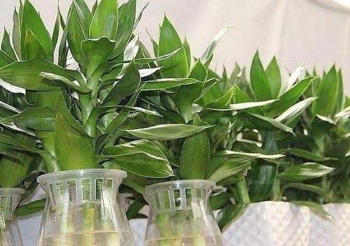 [家里]为什么有钱人家里都养这3种植物旺财又旺人,幸好知道早了