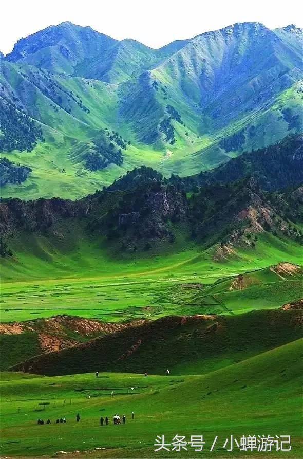 """柴达木盆地东南""""戈壁绿洲""""-都兰漫山遍野的紫花海寺花海草原"""