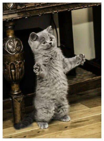 """貓咪界也有四大天王,回想當年""""那條魚得有這么大"""""""