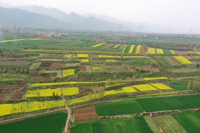 秦岭山下,西安杨庄油菜花实拍,看看和官方宣传照差多少?