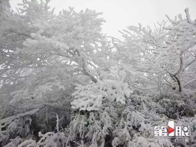很冷,但也很美!重庆多地迎来降雪,你那里下雪了么