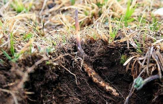 专家提示:冬虫夏草需被理性看待