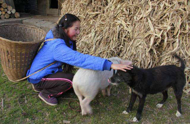 「有人」有人专门到农村收5年以上的老狗,80元一只,收来做啥?