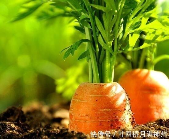 [宝宝]胡萝卜营养价值高!胡萝卜怎么做给宝宝吃有营养?