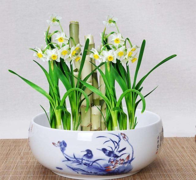 生命光復臨網,冬季一樣開花的植物,冬季室內不可缺少的花卉!
