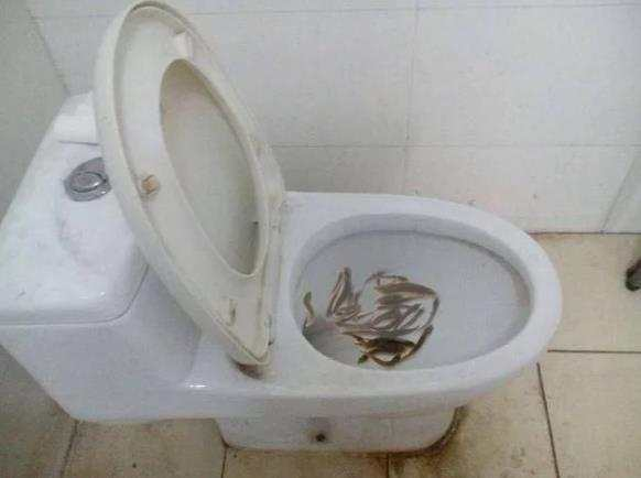 马桶堵了, 女子将活泥鳅倒入马桶来通厕所, 老公
