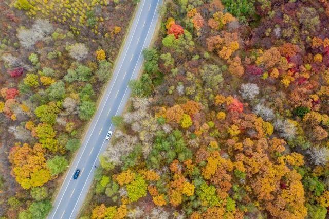 苦等1年,这条最美红叶路即将美爆,绝美风景不输新疆