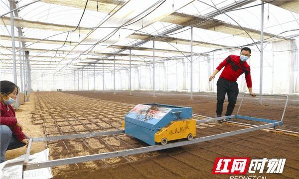宁乡农户尝试大棚电动育秧