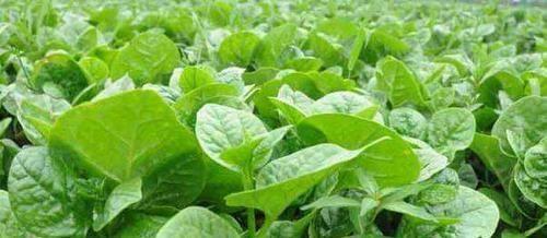 『营养』养生正当时,多吃四种食物,排毒素垃圾,给身体大扫除