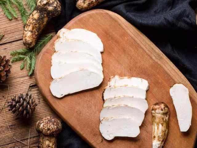 『真菌』这种野生真菌寿命短,营养价值高,被誉为《菌中之王》