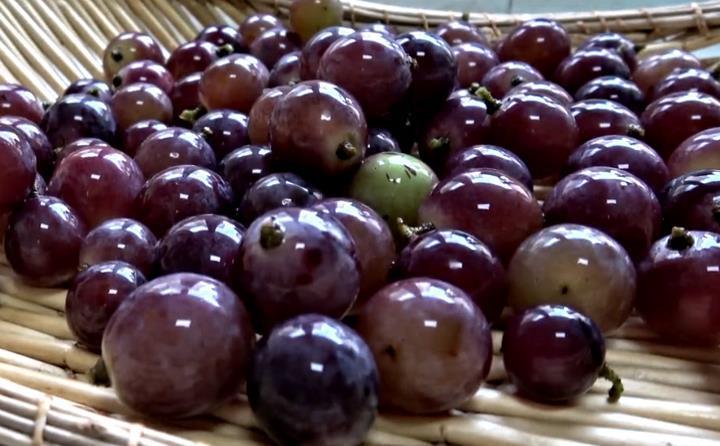 家庭版葡萄酒,色泽红润口感好,做法简单,零添加,全家爱喝