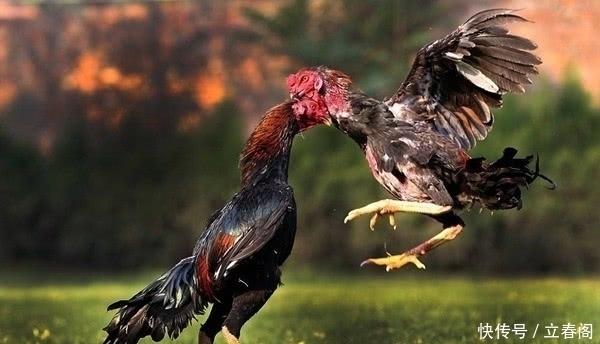 中国:中国四大名鸡全在北方,那南方没啥好吃的鸡吗?网友:一只顶四只