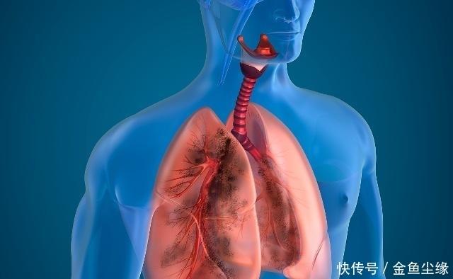<b>肺好不好怎么看?若有3个表现,恭喜你,肺很健康</b>