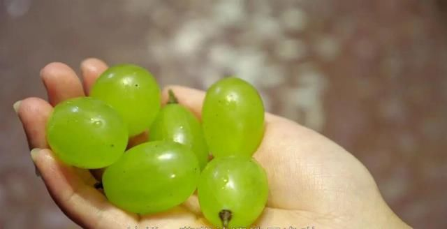 『葡萄』葡萄怎么洗才能干净快速又省事?教您一招!