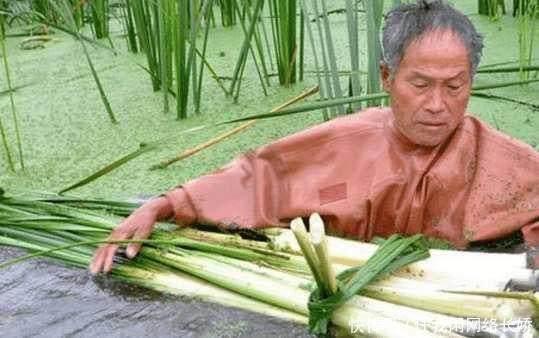 长在水中美味,农村人免费吃,城里人有钱都难吃到!